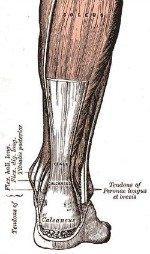 achilles tendon treatment 4