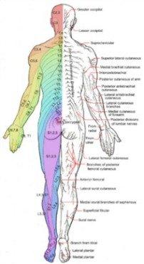 feet burning nerve pathway