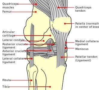 Exercises for chondromalacia patella knee pain exercises for chondromalacia patella knee pain relief solutioingenieria Choice Image
