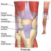 exercises for chondromalacia patella knee pain, Skeleton